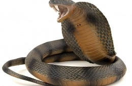 Snake cyber espionage toolkit unmasked