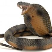 Snake cyber espionage toolkit unmasked